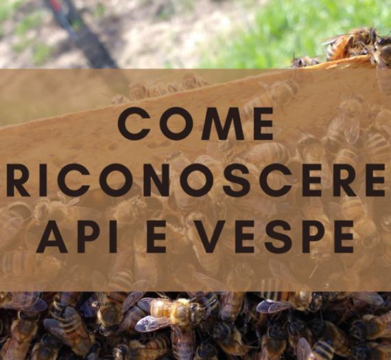 Riconoscere api e vespe
