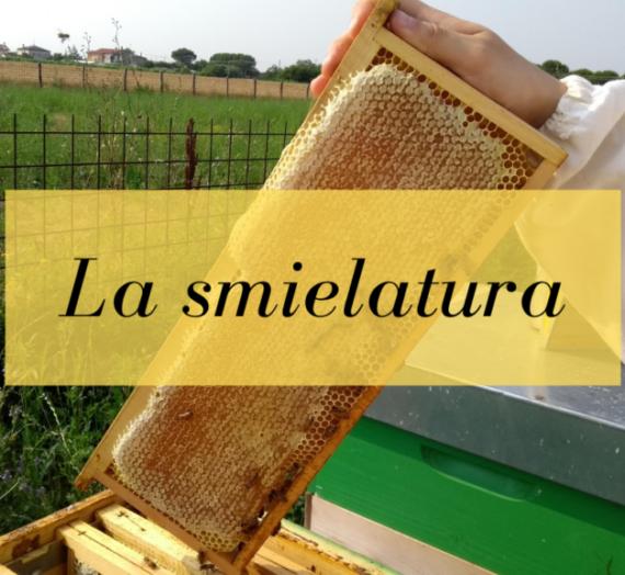 La smielatura dei favi da miele