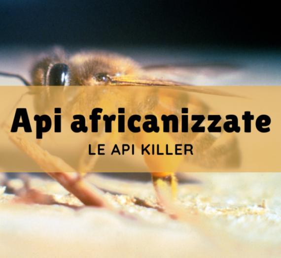 "Api africanizzate, le ""api killer"""
