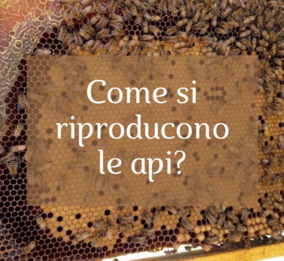 Come si riproducono le api?