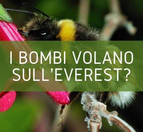 I bombi volano sull'Everest?