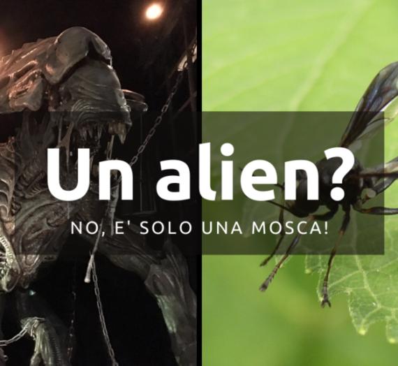 Un Alien? No, è solo una mosca!